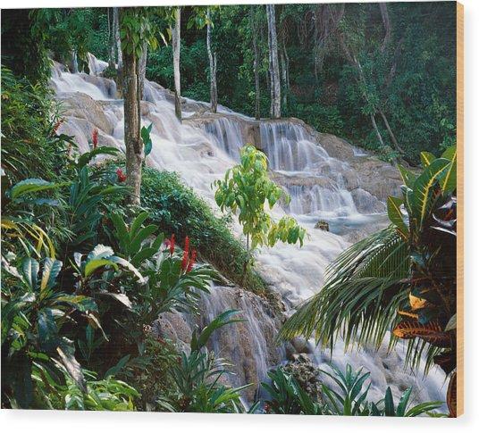 Dunn's River Falls Jamaica Wood Print