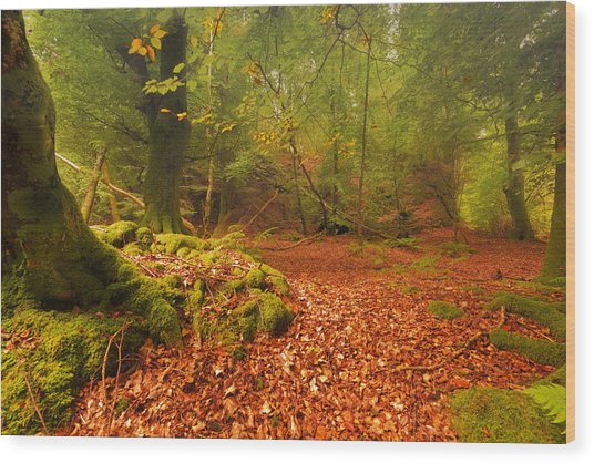 Dunstaffnage Castle Gardens Wood Print