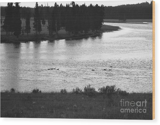 Dusk At The Yellowstone River Wood Print by Susan Chandler