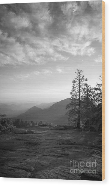 Dusk In Sequoia Wood Print