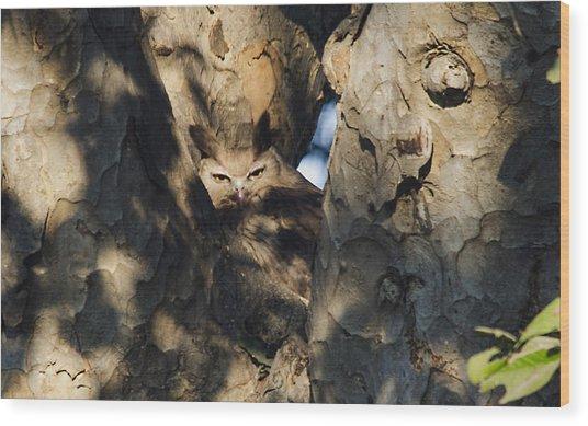 Dusky Horned Owl  Wood Print