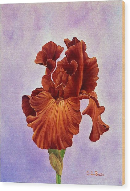 Dutch Chocolate Bearded Iris Wood Print