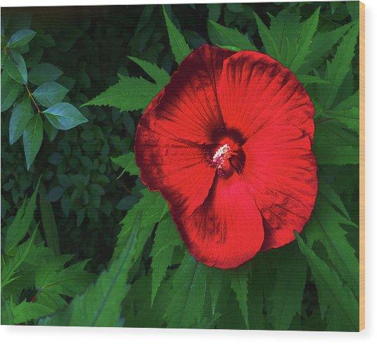Dynamic Red Wood Print