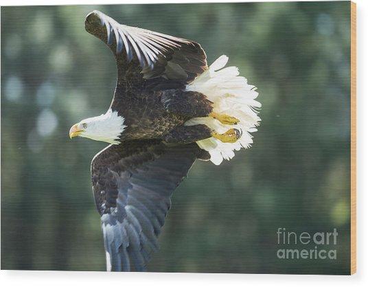 Eagle Flying 3005 Wood Print
