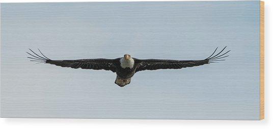 Eagle Flying At You Wood Print