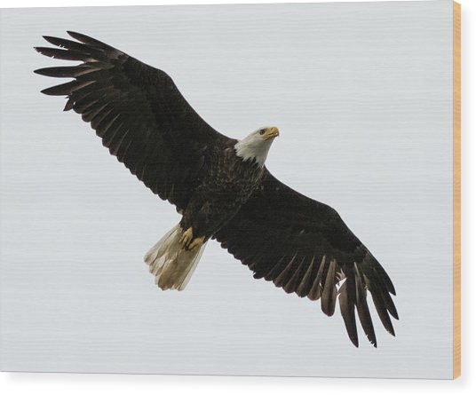 Eagle From Below Wood Print