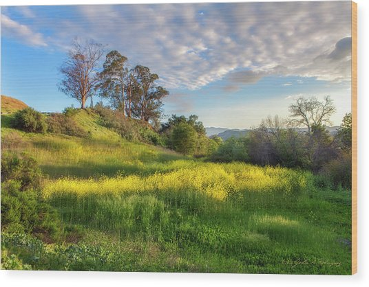 Eagle Grove At Lake Casitas In Ventura County, California Wood Print