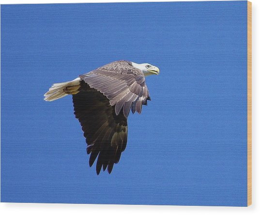 Eagle In Flight Wood Print by Don Youngclaus