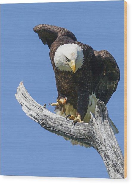 Eagle Landing Wood Print by Denise McKay