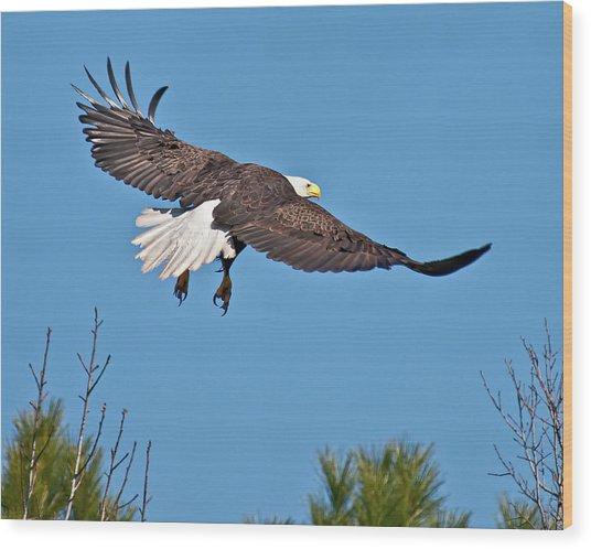 Eagle Launch Wood Print