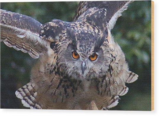 Eagle Owl Close Up Wood Print