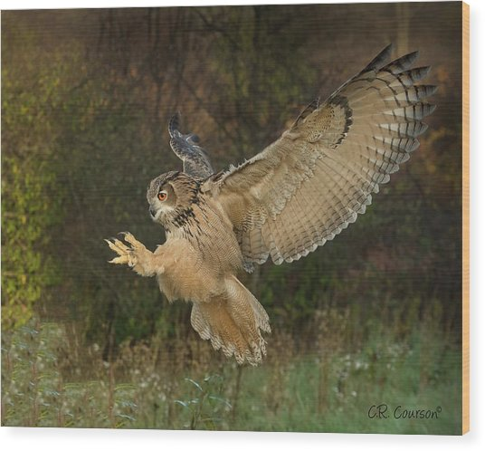 Eagle-owl Wings Back Wood Print