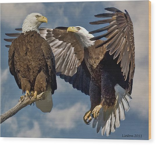 Eagle Pair 3 Wood Print