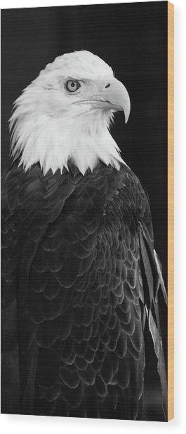 Eagle Portrait Special  Wood Print