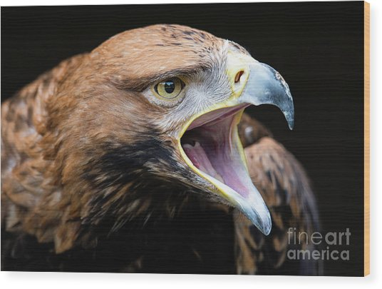 Eagle Power Wood Print
