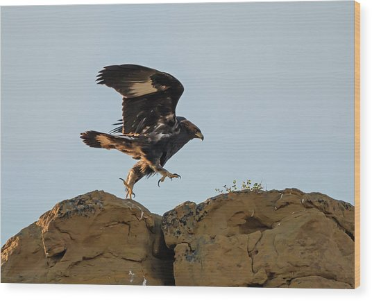 Eagle Rock Hopping Wood Print by Loree Johnson