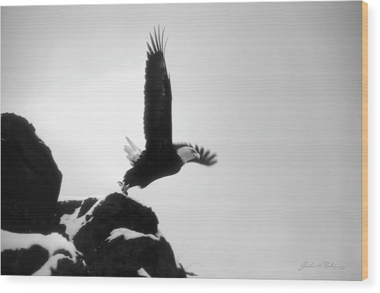 Eagle Takeoff At Adak, Alaska Wood Print