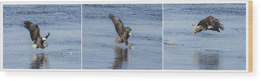 Eagle Triptych 2016-2 Wood Print
