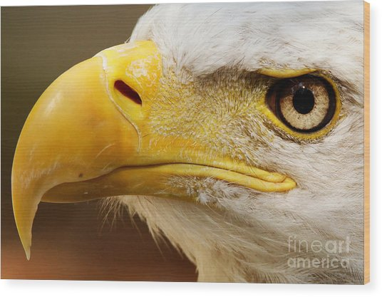 Eagles Eyes Wood Print