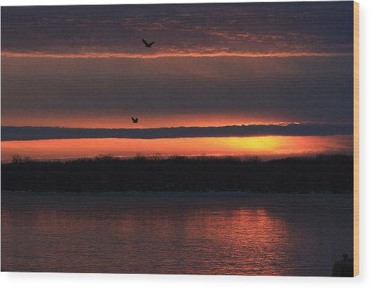 Eagles Over The Mississippi Wood Print by Dave Clark