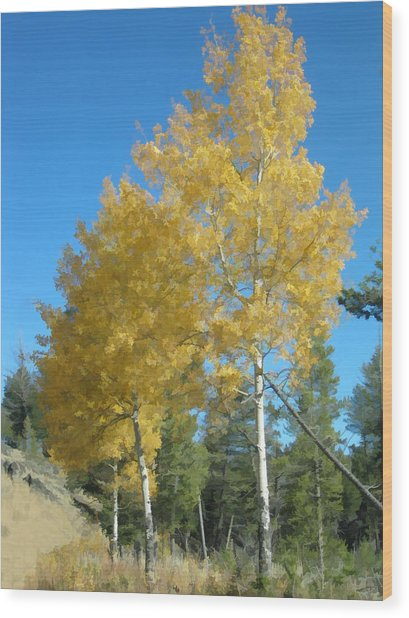 Early Autumn Aspens Wood Print