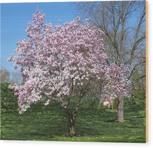 Early Blooms Wood Print