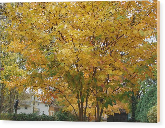 Early Fall Wood Print by Gregory Smith