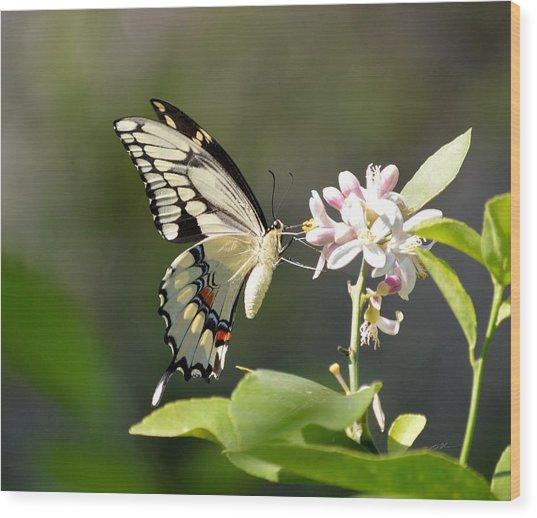 Early Lemonade Giant Butterfly Wood Print