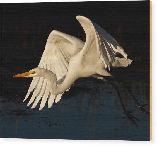 Early Light Egret Wood Print
