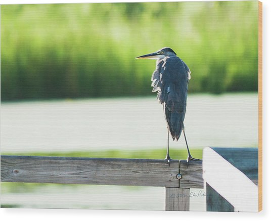 Early Morning Great Blue Heron Wood Print