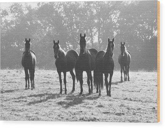 Early Morning Horses Wood Print
