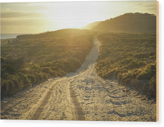 Early Morning Light On 4wd Sand Track Wood Print