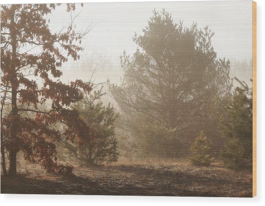 Wood Print featuring the photograph Early Morning Nature by Scott Hovind
