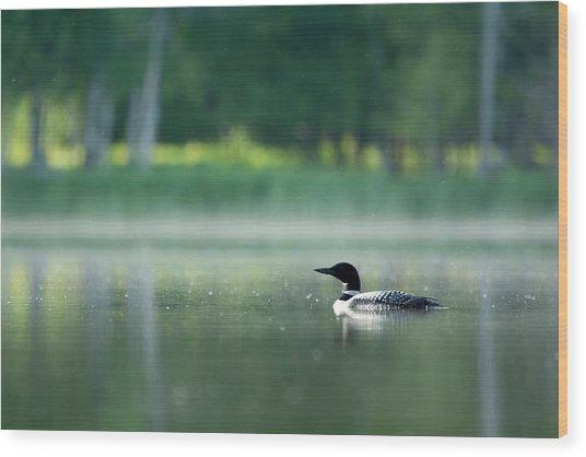 Early Morning Swim Wood Print
