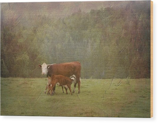 Early Morning Breakfast-cow Style Wood Print