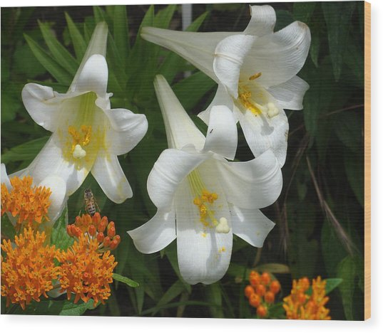Easter Lilies And Butterfly Weed Wood Print
