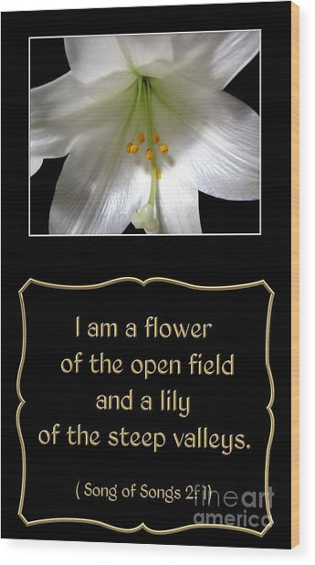 Wood Print featuring the photograph Easter Lily With Song Of Songs Quote by Rose Santuci-Sofranko