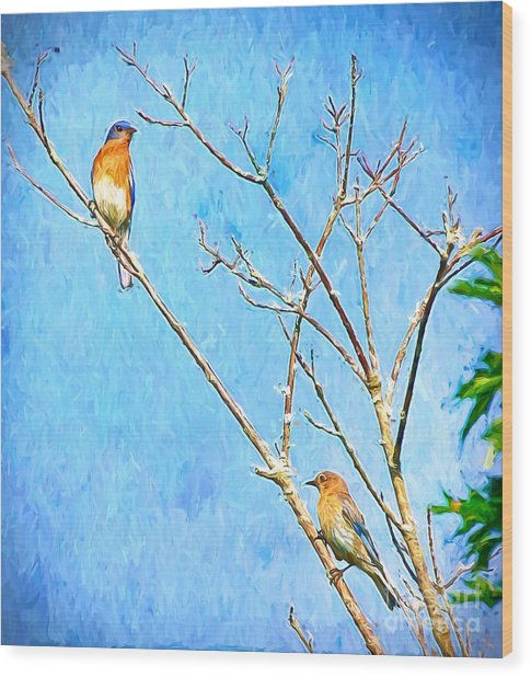 Eastern Bluebird Couple Wood Print