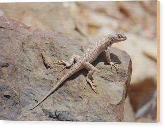 Eastern Fence Lizard, Sceloporus Undulatus Wood Print