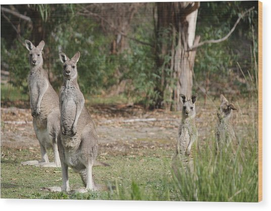 Eastern Grey Kangaroo Family Wood Print by Roo Printz