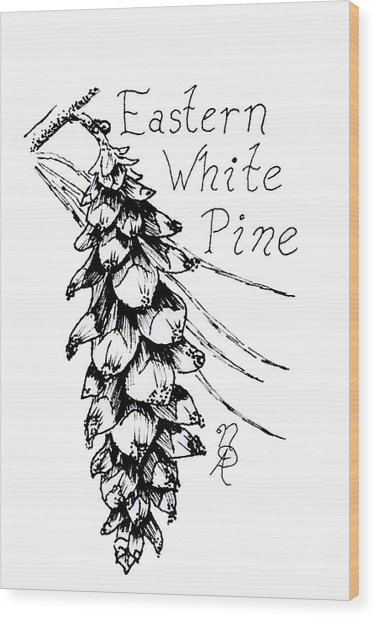 Eastern White Pine Cone On A Branch Wood Print