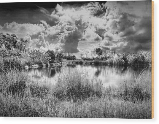Everglades Lake 5678bw Wood Print