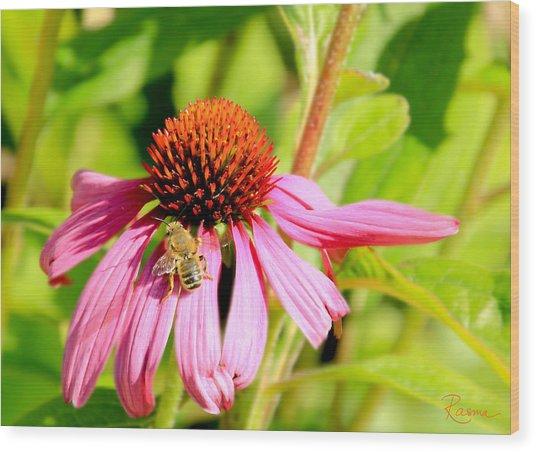 Echinacea Bee Wood Print