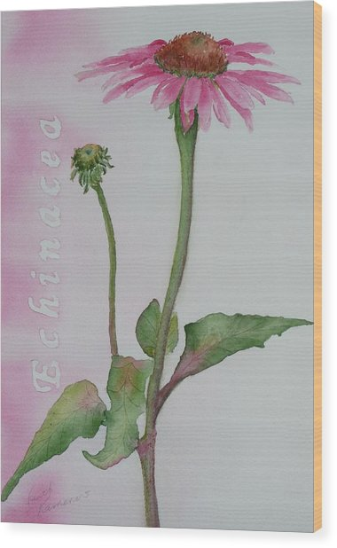 Wood Print featuring the painting Echinacea by Ruth Kamenev