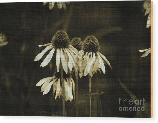 Echinacea Wood Print by Terrie Taylor