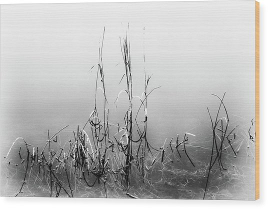 Echoes Of Reeds 1 Wood Print