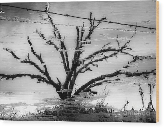 Eerie Reflections Wood Print