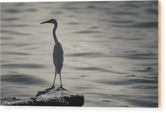 Egret At Lake Chapala Wood Print by Dane Strom
