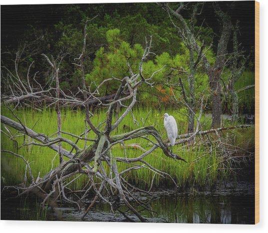 Egret At Pine Knoll 2 Wood Print