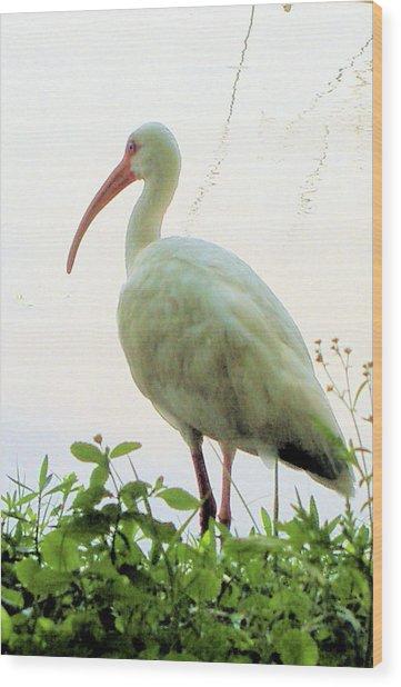 Egret At The Lake Wood Print